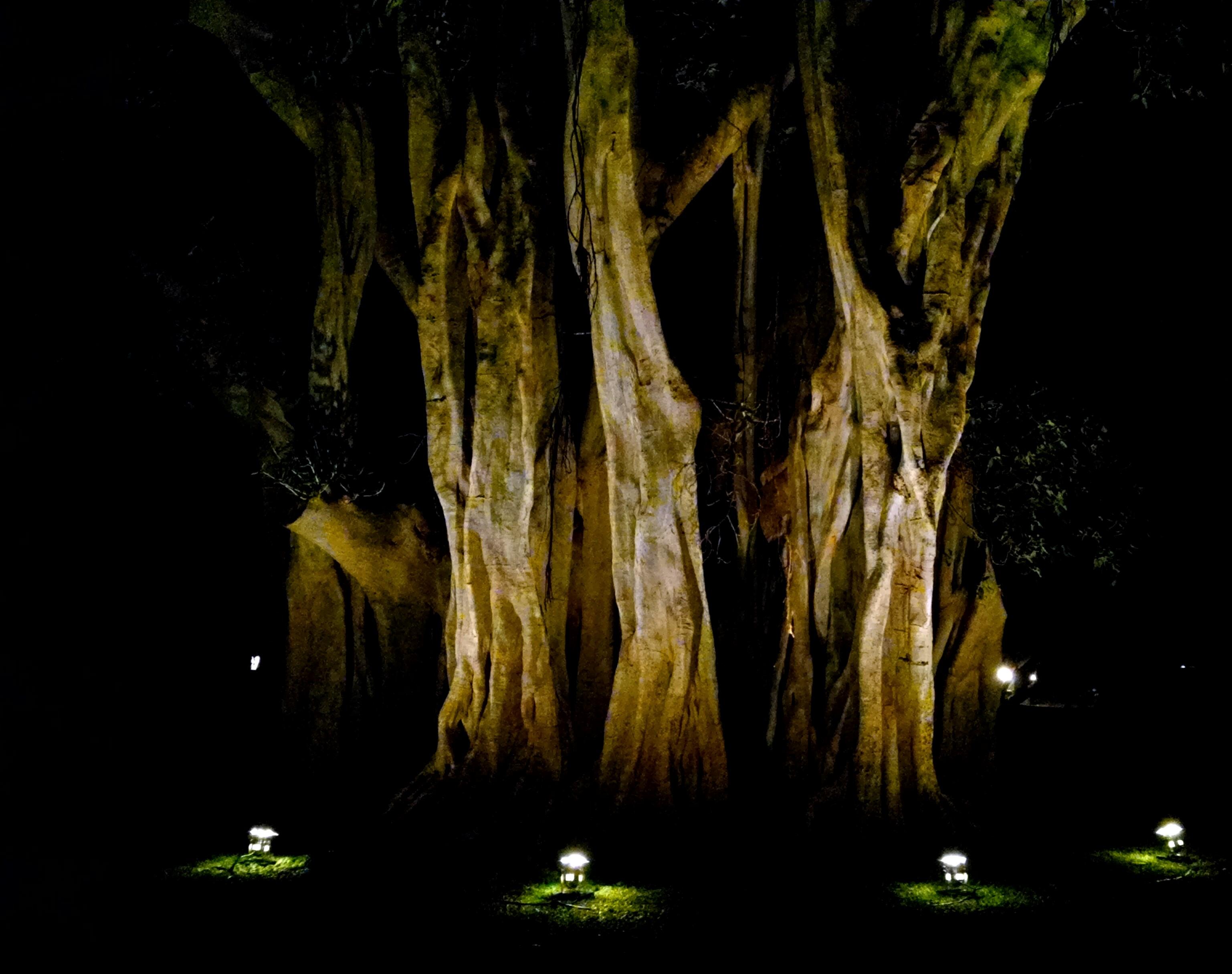 Lighting ET Events Kauai